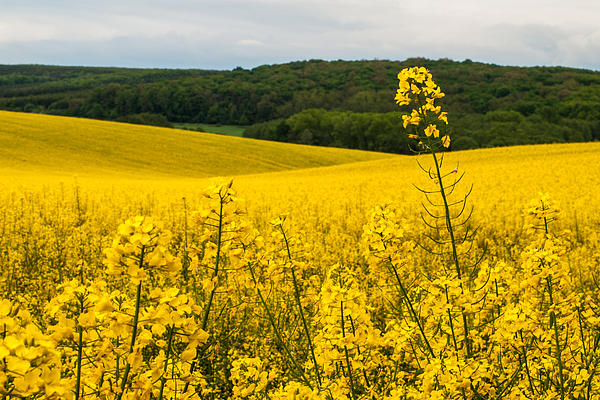 Landscapes Photograph - Lovely Hills by Davorin Mance