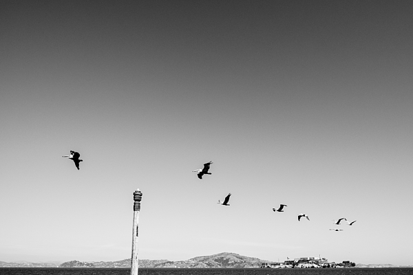 Low Angle View Of Birds Flying Against Clear Sky Photograph by Christian Soldatke / EyeEm