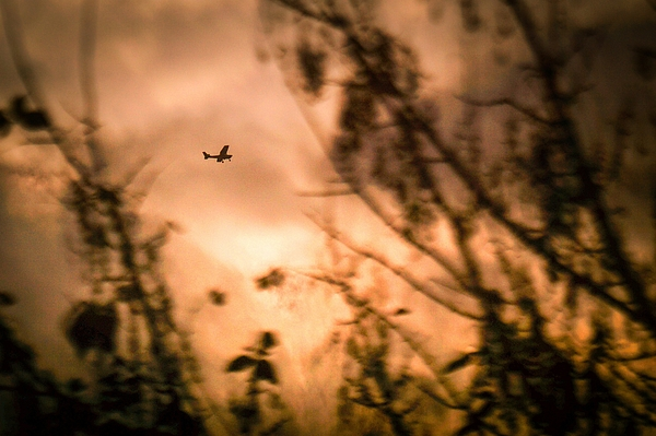 Low Angle View Of Silhouette Airplane And Trees Against Sky During Sunset Photograph by Andres Ruffo / EyeEm