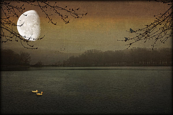 Nature Photograph - Lunar Lake by Tom York Images