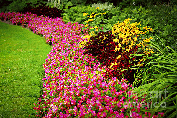 Garden Photograph - Lush Summer Garden by Elena Elisseeva