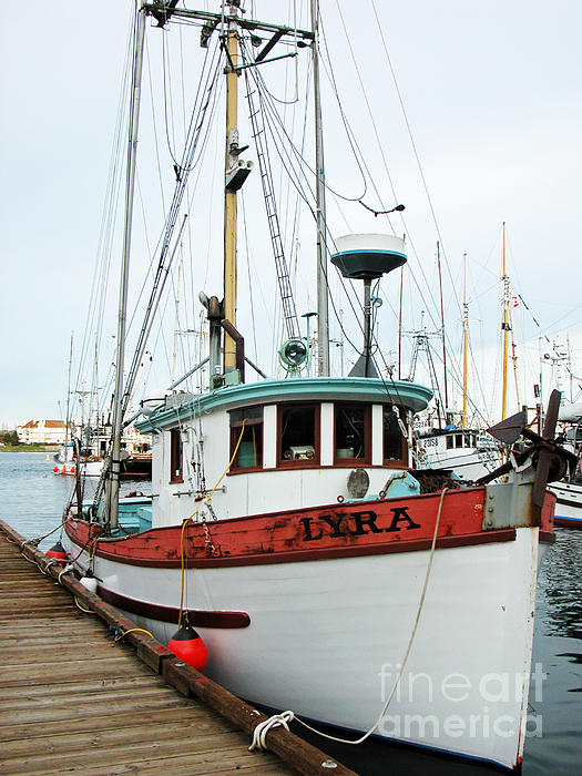 Wooden Boat Photograph - Lyra --------victoria by Don F  Bradford