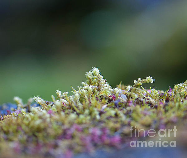 Closeup Photograph - Magical Moss by Sarah Crites