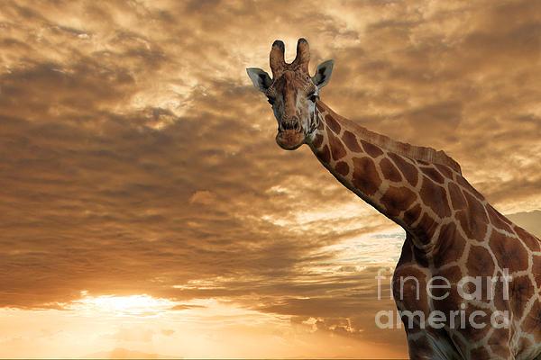 Giraffe Photograph - Magical Savanna by Pete Reynolds