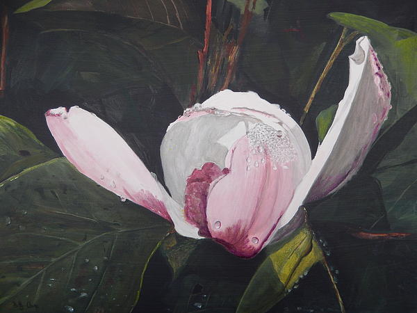 Flower Painting - Magnolia Flower by Betty-Anne McDonald