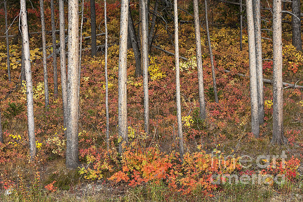 Autumn Photograph - Majestic Autumn In The Grand Tetons by Sandra Bronstein