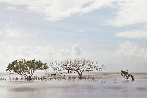 Abstract Photograph - Mangrove Tree In Blurred Sea by Dirk Ercken