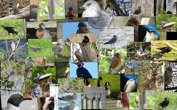 Photograph - Maryland Birds by Tom Ernst