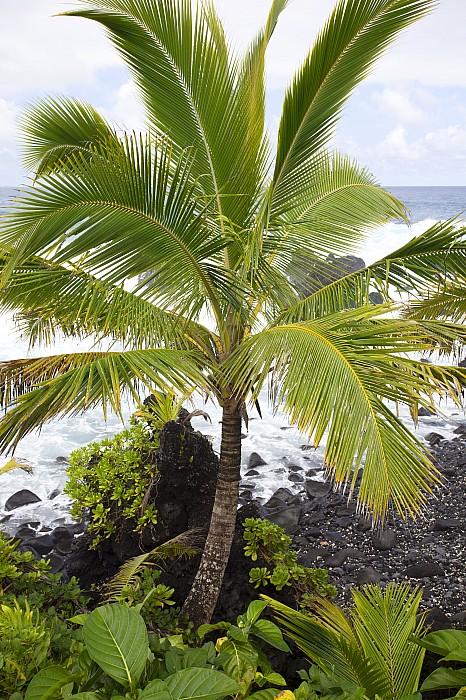 Beach Photograph - Maui Coast by Jenna Szerlag