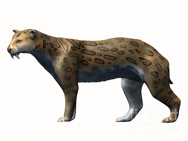 Side View Digital Art - Megantereon Cultridens, Pliocene by Nobumichi Tamura