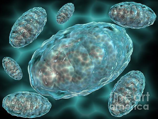 Horizontal Digital Art - Microscopic View Of Mitochondria by Stocktrek Images