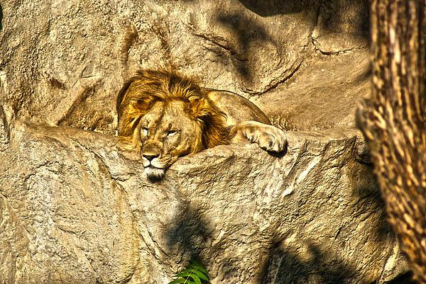 Animals Photograph - Midday Siesta by Joe Bledsoe