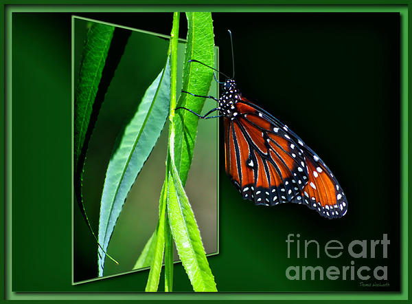 Butterfly Photograph - Monarch Butterfly 04 by Thomas Woolworth