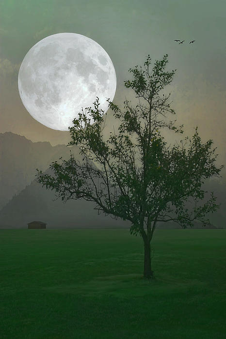 Nature Photograph - Moonlight On The Plains by Tom York Images