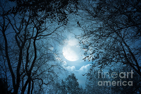 Moonlight Photograph - Moonlight With Forest by Boon Mee