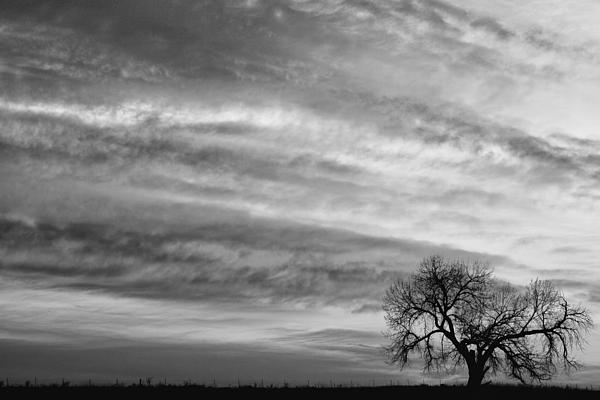 Morning Photograph - Morning Has Broken Like The First Dawning Landscape Bw by James BO  Insogna