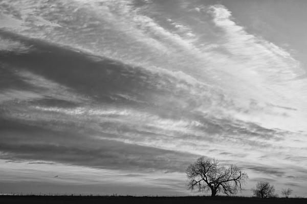 Morning Photograph - Morning Has Broken Three Trees Bw by James BO  Insogna