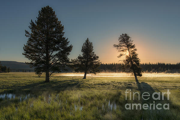 Flora Photograph - Morning Light In Yellowstone by Sandra Bronstein