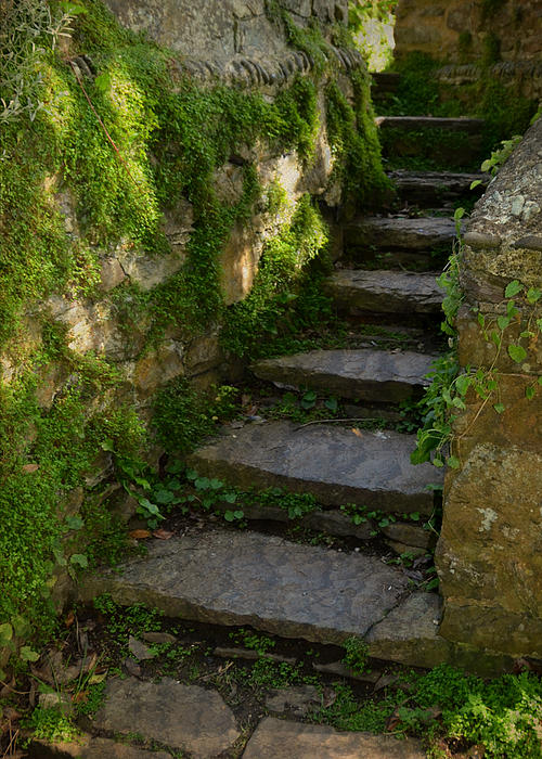 Step Photograph - Mossy Steps by Carla Parris
