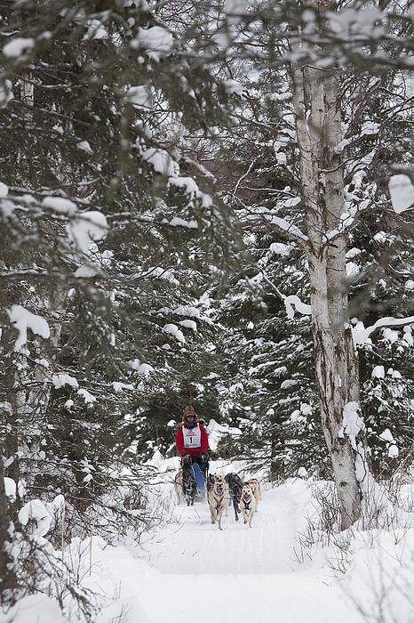 Adult Photograph - Musher In The Forest by Tim Grams
