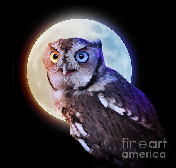 Animal Photograph - Mysterious Owl Animal At Night With Full Moon by Angela Waye