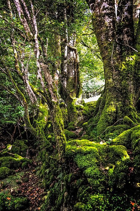 Ireland Photograph - Natural Emeralds. I Wicklow. Ireland by Jenny Rainbow