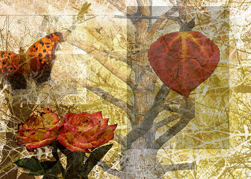 Nature Photograph - Nature Collage by Cherie Haines
