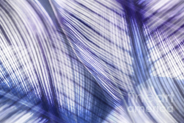 Leaf Photograph - Nature Leaves Abstract In Blue And Purple by Natalie Kinnear