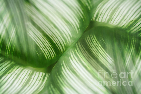 Leaf Photograph - Nature Leaves Abstract In Green 2 by Natalie Kinnear