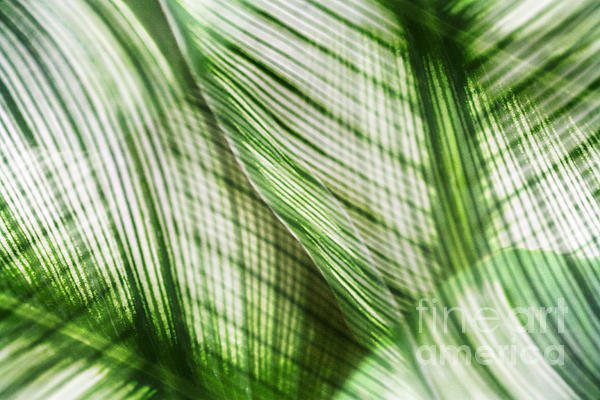 Leaf Photograph - Nature Leaves Abstract In Green by Natalie Kinnear