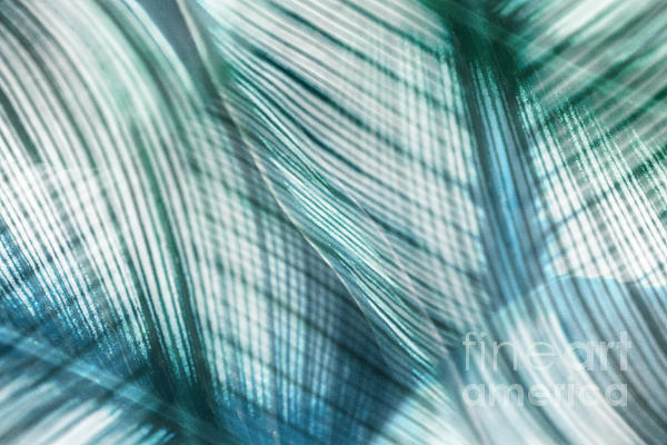 Leaf Photograph - Nature Leaves Abstract In Turquoise And Jade by Natalie Kinnear