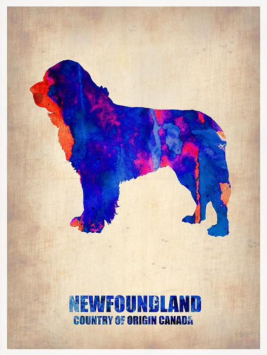 Newfoundland Painting - Newfoundland Poster by Naxart Studio