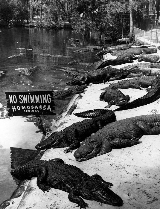 Retro Images Archive Photograph - No Swimming by Retro Images Archive
