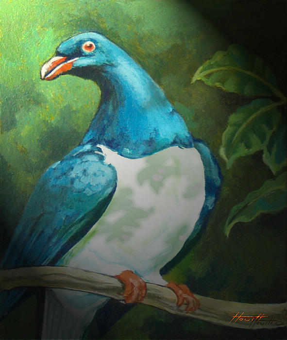 Bird Painting - Nz Native Pigeon Kereru by Patricia Howitt