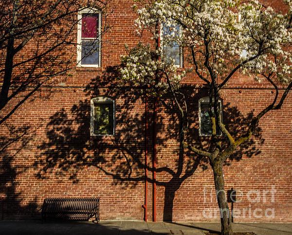 Old Town Bricks Photograph - Old Town Bricks by Mitch Shindelbower