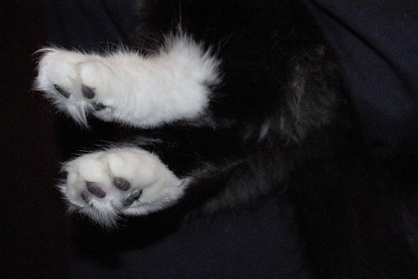 Cats Photograph - On Little Cat Feet by Marilyn Wilson