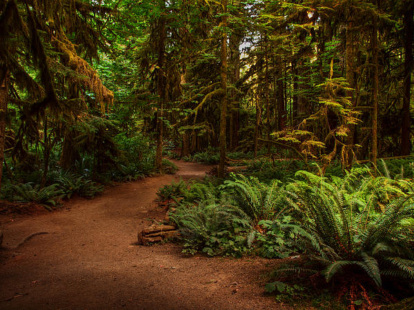 Forest Photograph - On The Trail To .... by Randy Hall