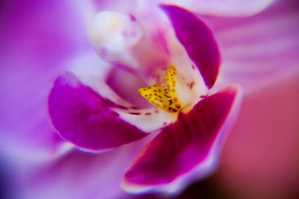 Flower Photograph - Orchide Detail by Kim Lagerhem