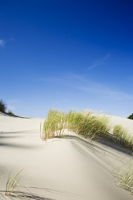 Area Photograph - Oregon Dunes by Charmian Vistaunet