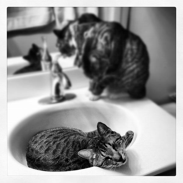Cat Photograph - Oskar And Klaus At The Sink by Mick Szydlowski