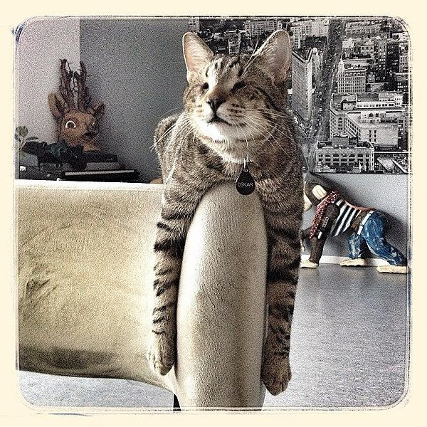 Cat Photograph - Oskar Arms by Mick Szydlowski