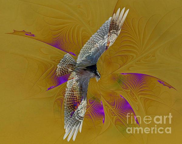 Osprey Photograph - Osprey Wild by Deborah Benoit