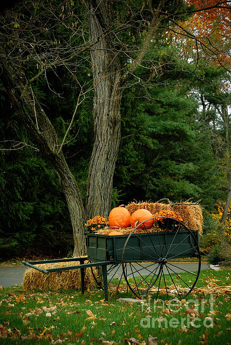 Autumn Photograph - Outdoor Fall Halloween Decorations by Amy Cicconi