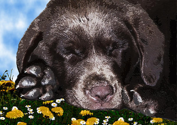 Animal Paintings Digital Art - Outside Portrait Of A Chocolate Lab Puppy  by Chris Goulette