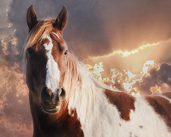 Equine Photograph - Painted Sunrise by Ron  McGinnis