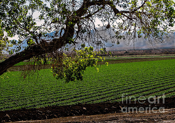 Farm Photograph - Panoramic Of Winter Lettuce by Robert Bales