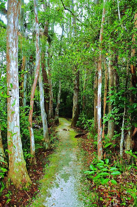 Landscape Photograph - Pathway To The Rainforest by Kicking Bear  Productions