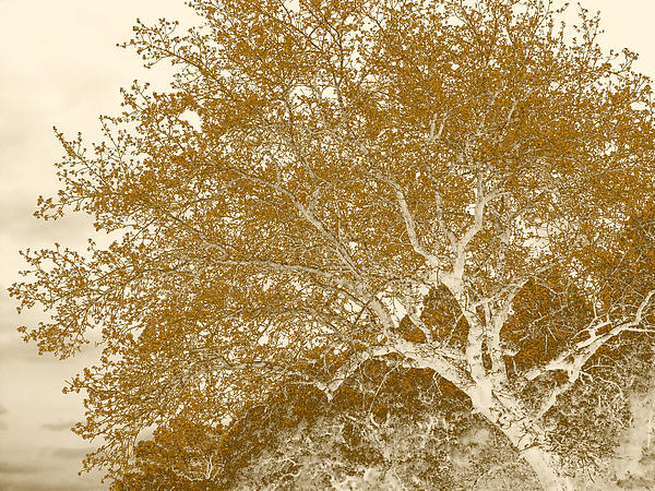 Tree Photograph - Patience by Wendy J St Christopher