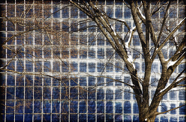 Tree Photograph - Patterns Of Winter by Joanna Madloch