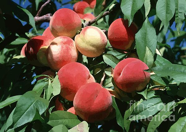 Agriculture Photograph - Peaches On Tree by Lanjee Chee